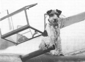 Seddy, der Hund von Lt. Steinhilper auf der Fläche seiner Me 109